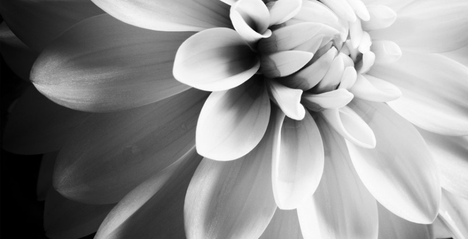Flora #1